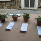 Perennial Entries