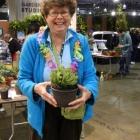 Barb Euphorbia