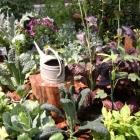 Garden Flowershow