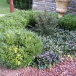 Textures in the Entrance Garden